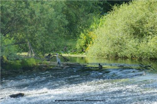 eu angeln ist nicht gleich angeln schon gar nicht in deutschland und frankreich mittelhessenblog
