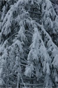 Auf dem Weg nach Weihnachten in Mittelhessen: Von Krippen, Ganoven und Gnadenerlässen