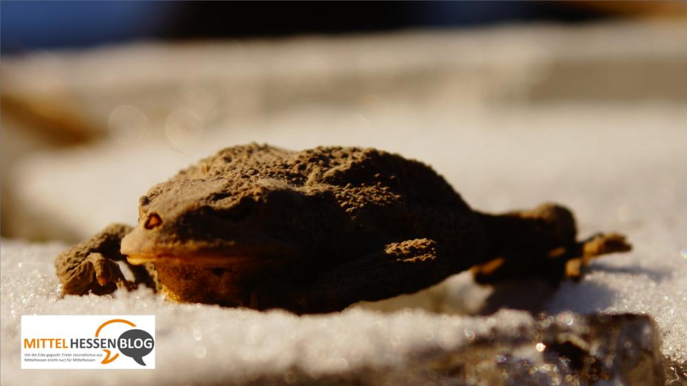 Pilotversuch in Mittelhessen: Mit neuartigen Verkehrschildern sollen Amphibien vor dem Erfrierungstod geschützt werden. Bild: v. Gallera/Mittelhessenblog.de