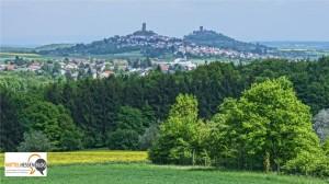 """Alt wie ein Baum: Mittelhessen und """"ihre"""" Bäume"""