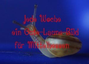 """<span class=""""dquo"""">""""</span>In der Ruhe liegt die Kraft"""" — Das Gute-Laune-Bild zum Wochenanfang in Mittelhessen"""