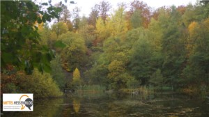 Wandertipp: Blasbachtal im Lahn-Dill-Kreis