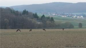 Mal so, mal so: Wildtiere mit Freigang in Frankenbach in Mittelhessen