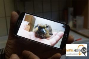 Hungen-Bellersheim: Bald 1200 Quadratmeter-Voliere für Vogelauffangstation