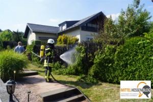 Biebertal: Wespennest in Fellingshausen bekämpft — 40 Meter Hecke brennen