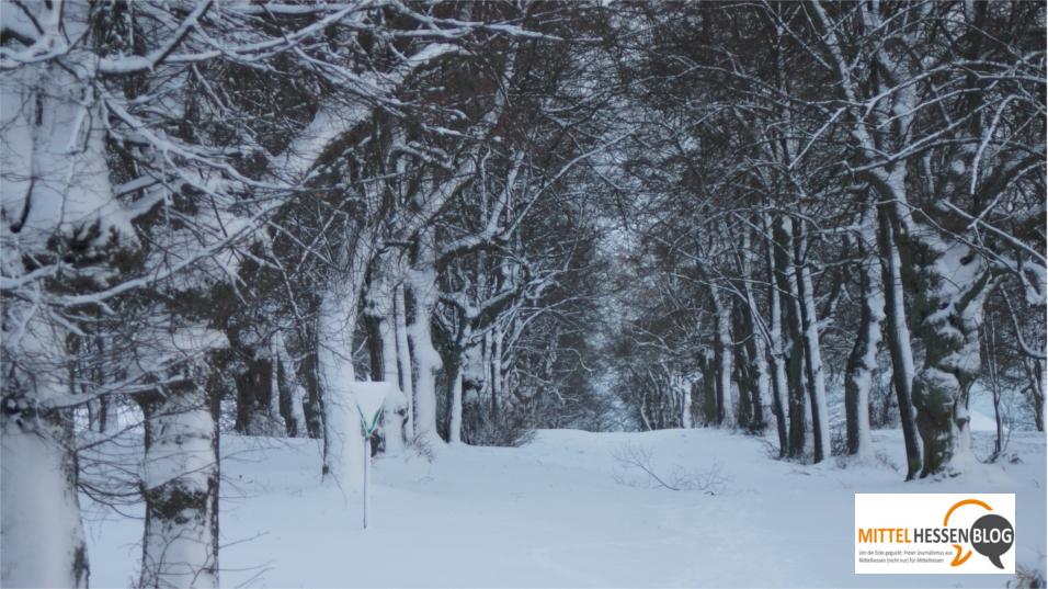 Winter, wie er gewöhnlich in unseren Breiten als normal empfunden wird: Diese Aufnahme vom Nikolaustag 2013 zeigt die tief verschneite Alleezufahrt zur Jugendburg Hohensolms. Foto: v. Gallera