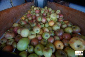 36000 Liter Apfelsaft und ein Apfelbaumkataster