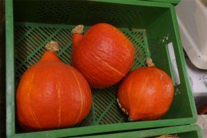 Kürbisse aus eigenem Anbau gehören mit zum Ladenangebot des Hofguts. Foto: v. Gallera